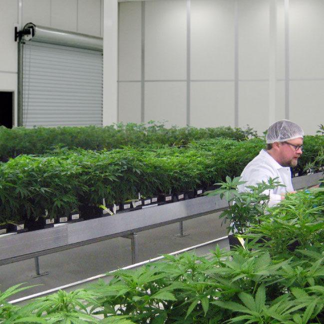 Modular Cannabis Grow Room